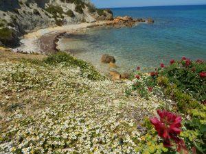 musikk på Malta